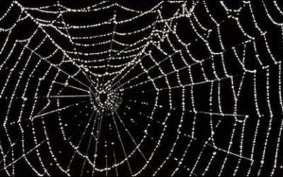 Caught in the Dark Web?